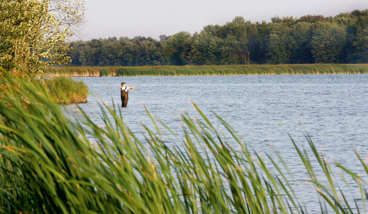 Terres humides de la rivière des Outaouais. ©Ville de Gatineau