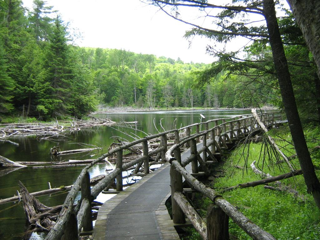 Réserve écologique de la Forêt-la-Blanche. Photo : Amis de la Forêt-la-Blanche